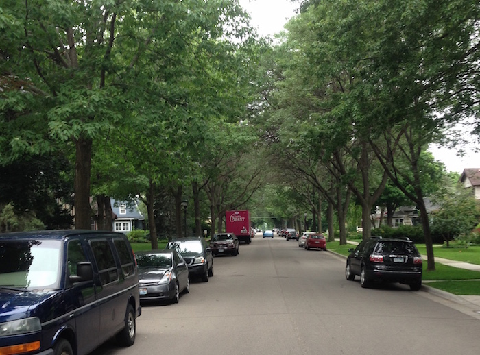 street of trees